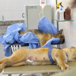Ibram abre 2,5 mil vagas para castrações gratuitas de cães e gatos